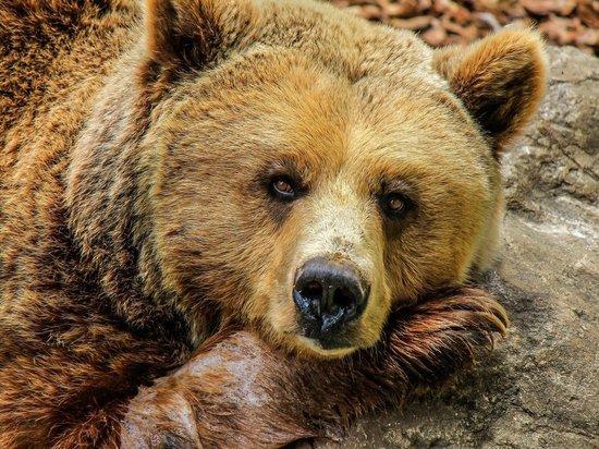 Бесстрашный житель Бурятии подзывал к себе медведя