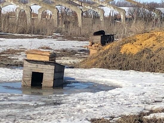 Прокуратура заинтересовалась приютом для бездомных животных в Сасове