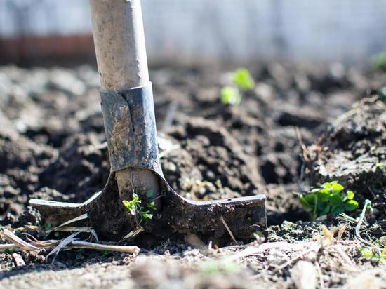 «Огородные» приметы и поверья о несчастьях