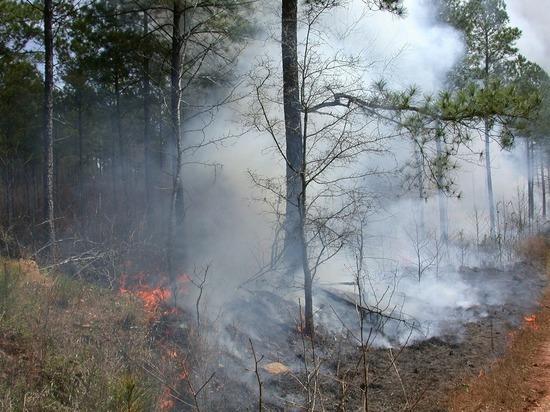 В Челябинске объявили о начале пожароопасного сезона