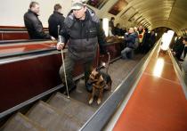 Известная поговорка гласит: собака человеку неизменный друг
