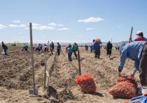 Кара-оол потребовал масштабирования проекта «Социальный картофель»