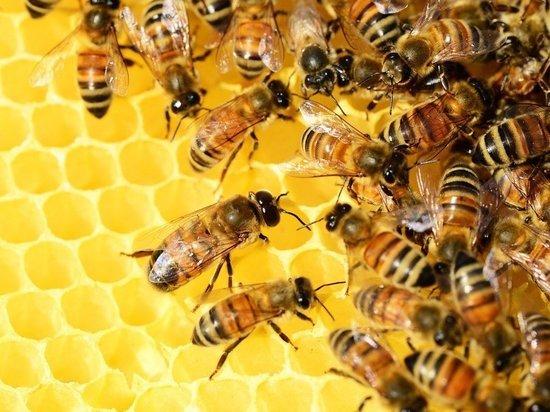 Пасеки запретили размещать рядом с кладбищами: отравляют мед