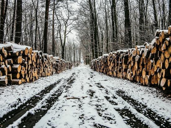 Черные лесорубы из Кузбасса предстанут перед судом за вырубку леса на 17 млн рублей
