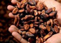 С начала года через псковскую границу провезли 15 тонн какао