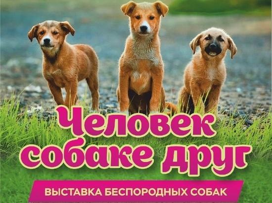 17 апреля в Рязани пройдет выставка беспородных собак