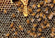Если на заре ХХ века объединялись пролетарии всех стран, то сегодня дело дошло до российских пчеловодов