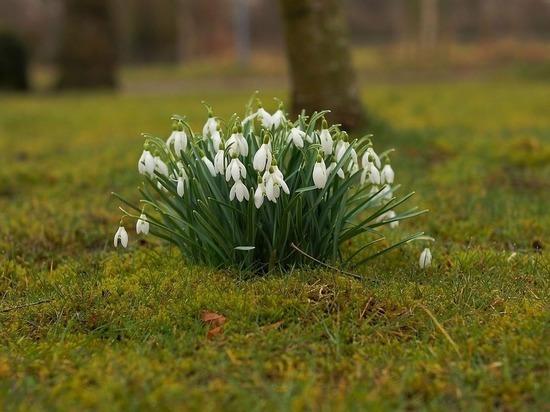 7 апреля в Смоленской области ожидается снег с дождем