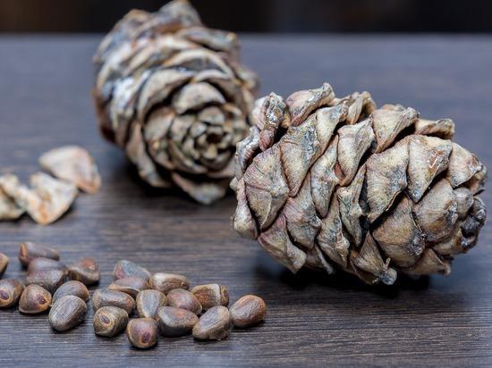 Кузбасские орехи стали любимым лакомством иностранцев