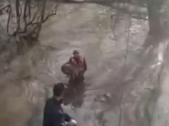 В Обнинске спасли собаку, тонущую в разбушевавшейся реке
