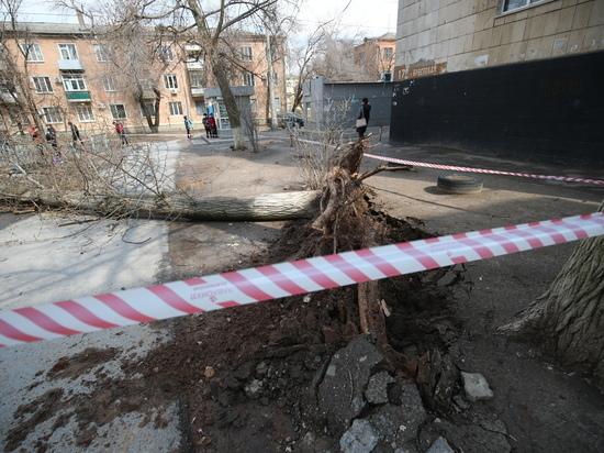 64-летняя пенсионерка погибла от упавшего дерева в Волгограде