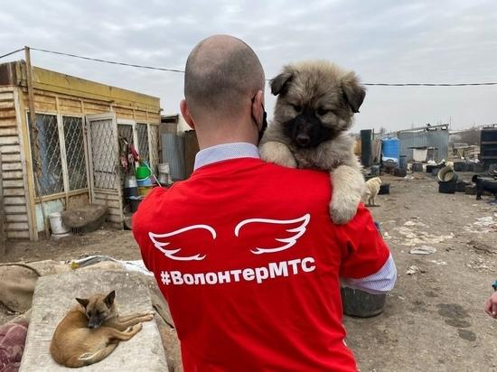 Контроль собак в Астрахани теперь можно осуществить при помощи искусственного интеллекта