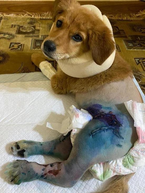 В Бишкеке владельцу собаки грозит реальный срок за самооборону