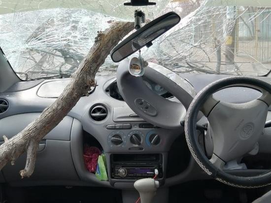 Пункт назначения по-астрахански: дерево насквозь пронзило автомобиль