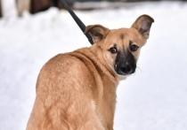 В связи с этим кураторы приюта срочно ищут передержку для собак, которые остались на улице