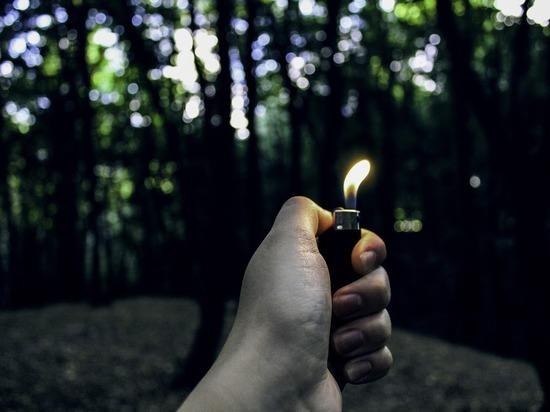 Вознаграждение за поимку поджигателей леса увеличилось в Забайкалье до 50 тыс р