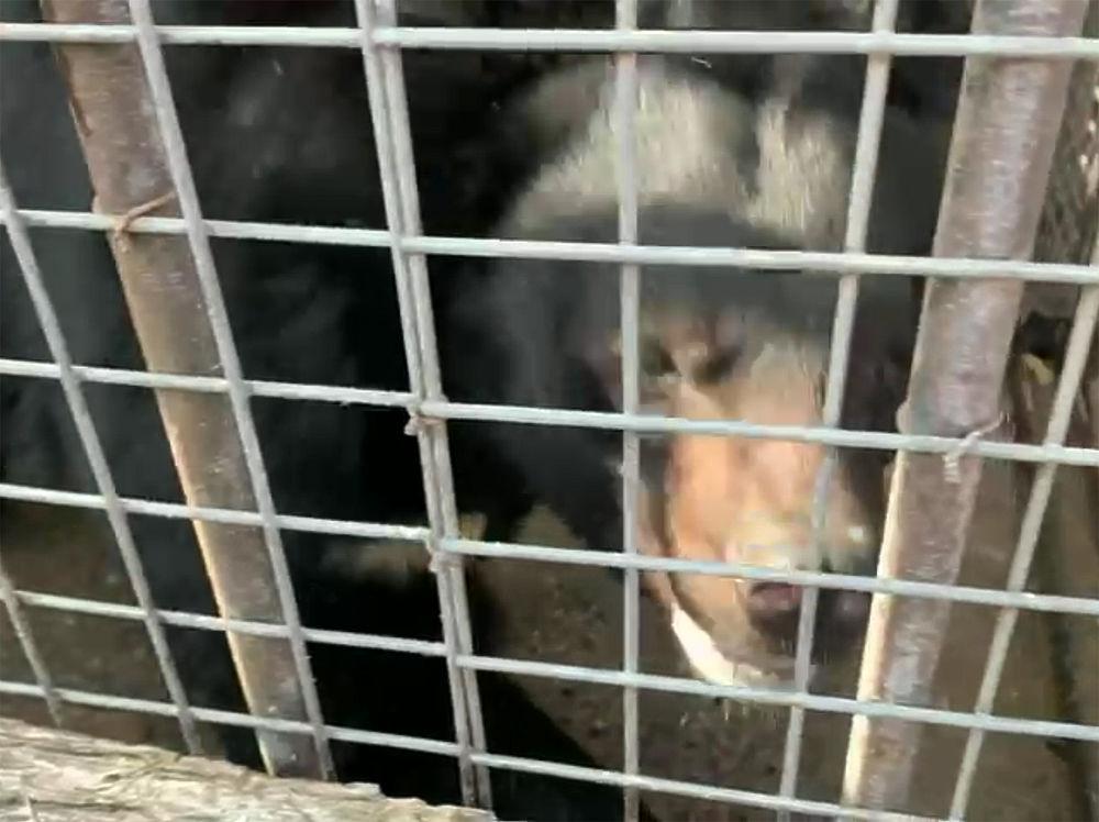 Зоопарк «мытищинского стрелка» Барданова спровоцировал Минприроды на ужесточение законов