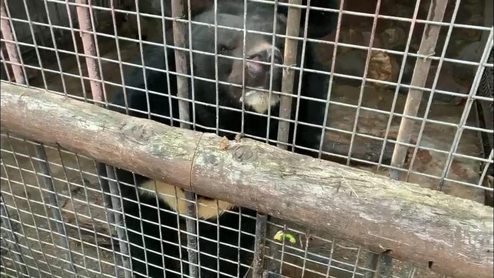 Зоопарк стрелка из Мытищ Барданова: от крокодилов до кур