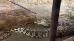"""Крокодил ярится: появилось видео с участка """"мытищинского стрелка"""" Барданова"""