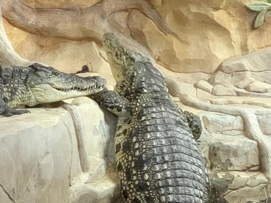 Медведей и крокодилов «мытищинского стрелка» Барданова вывозили, замотав скотчем