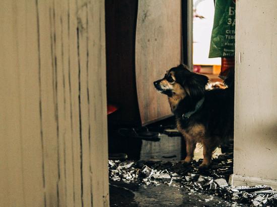 Пожар в Севастополе: из многоэтажки удалось спасти 14-летнюю девушку