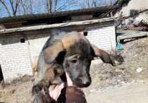 МЧС спасли маленьких щенков в Приморье