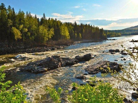 Томские ученые изучат гигантские растения в сибирской тайге