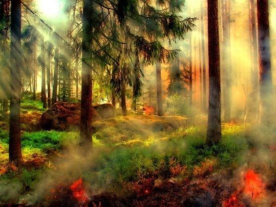В Кемеровской области введен особый противопожарный режим