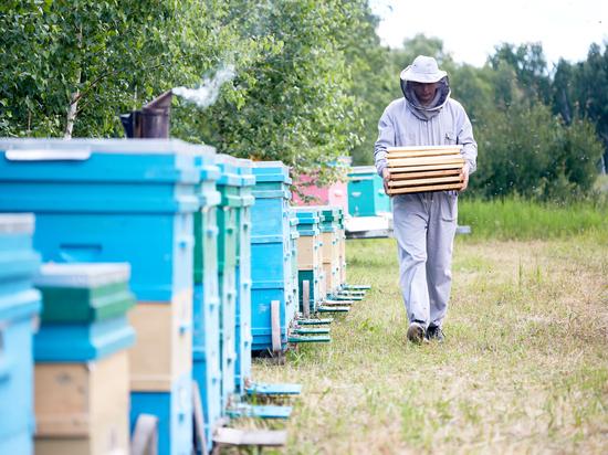 Пчеловодам хотят запретить пасеки у кладбищ, рек, озёр и болот и мусорных полигонов