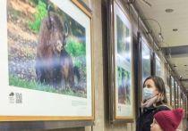 Несколько десятков фотографий Серпуховского заповедника развесили в столичном метро