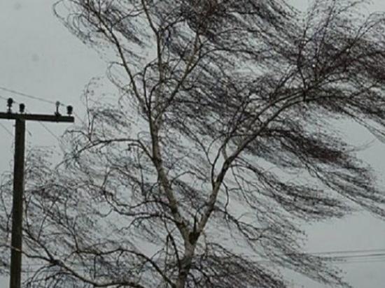 8 апреля в Рязанскую область придет сильный ветер