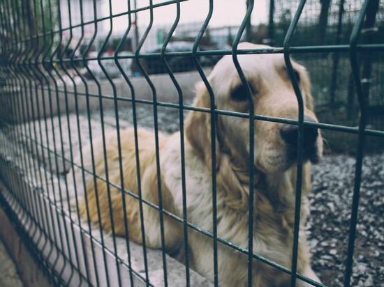 Депутат сравнил условия содержания собак и людей в приютах Бурятии