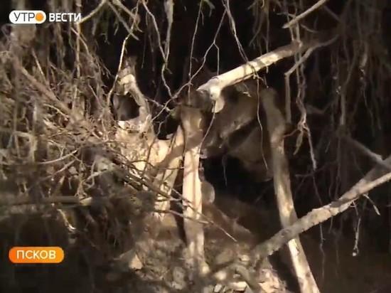 В центре Пскова обнаружили кости, похожие на человеческие останки