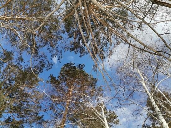На месте жилого дома в Бурятии, купленного на материнский капитал, оказался только лес