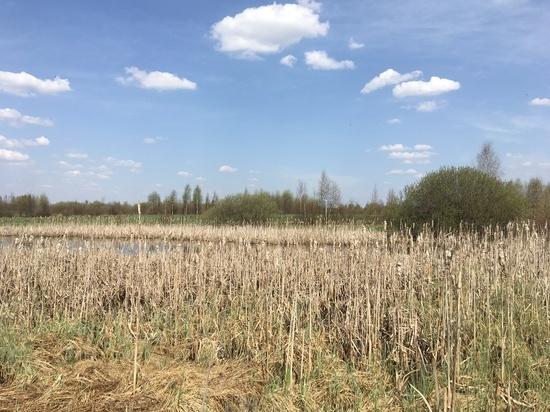 На Матрону Полурепицу в Смоленске 9 апреля потеплеет