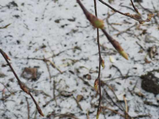 Утро 9 апреля было свежим, как в первый день зимы