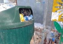 В Оренбурге контейнеры для сбора ТКО требуют ремонта или замены