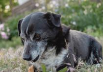 Астраханская прокуратура вмешалась в дело о погибшем от укусов собак мужчине