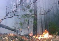 В Таштыпском районе горел лес