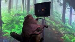 Компания Илона Маска научила макаку играть в видеоигру: веселые кадры