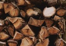 Легальность работ по вырубке леса под Порховом проверит прокуратура