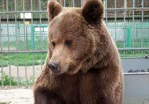 В Этнографическом музее Бурятии появились медвежата