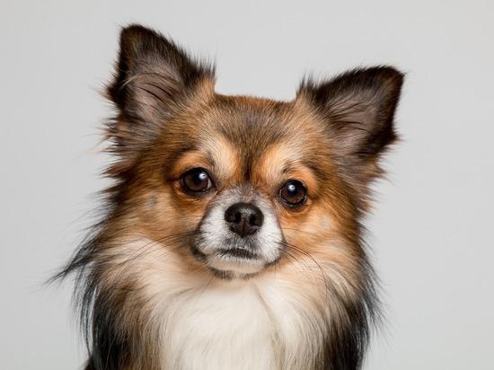 ТОП-5 самых распространенных мифов о маленьких собаках