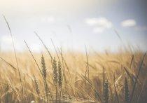 Законодатели продолжают следить за ситуацией с влагообеспеченностью кубанских земель для урожая
