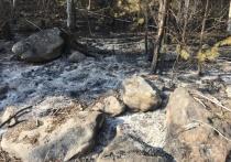 Под суд пойдёт турист из Иркутска, устроивший лесной пожар в заказнике