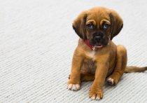 У собак выявлена способность ревновать хозяев