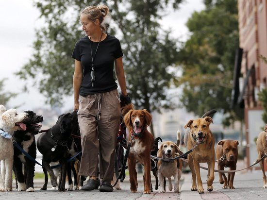 В Саяногорске патруль проверит, где и как выгуливают своих собак горожане