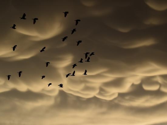 В петербургском небе увидели редкие облака