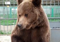 Медвежат, родившихся в зоосаде в Улан-Удэ, разлучат с матерью