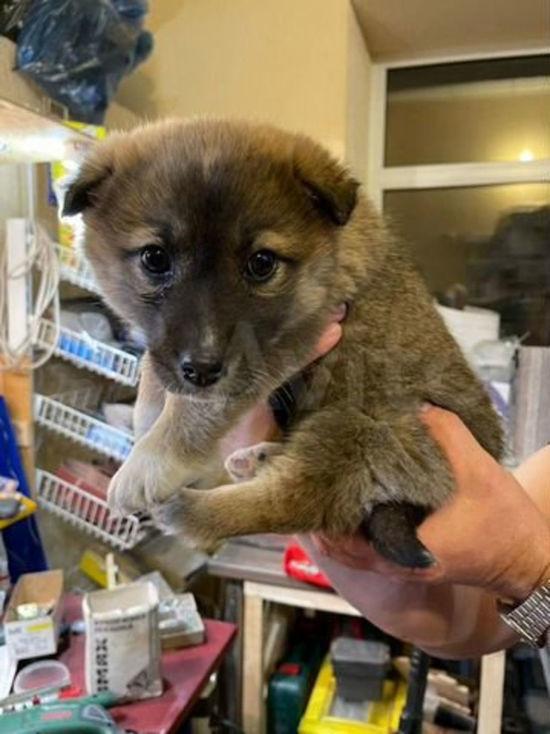 В Кемерове щенята-найденыши ищут новых хозяев
